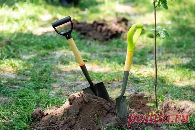 Улучшаем глинистую почву - Домашние Советы