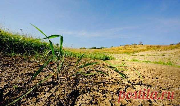 Как улучшить глинистую почву? | 6 соток