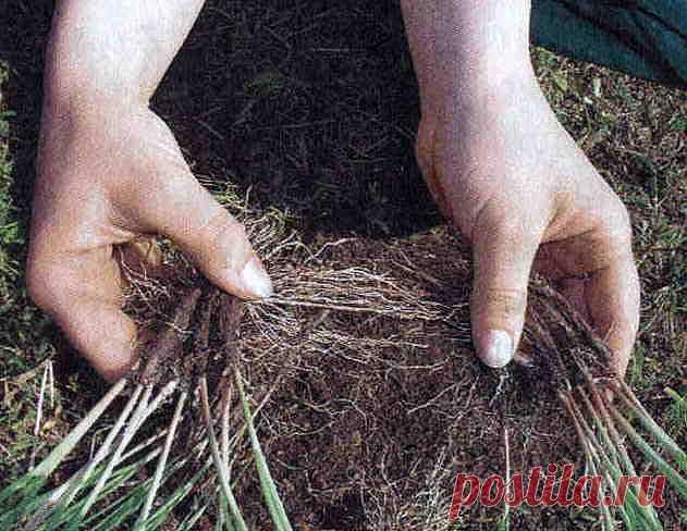где размножаются семена