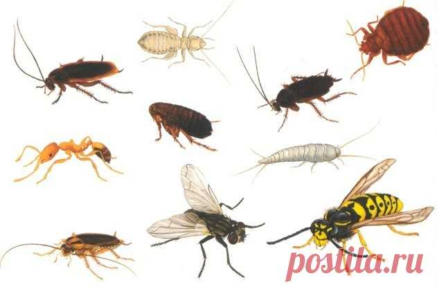 HOW TO STRUGGLE WITH HOUSEHOLD INSECTS?