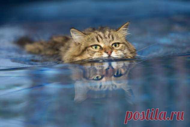 Почему котики боятся купаться? . Тут забавно !!!