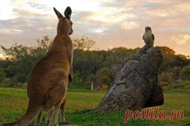 Почему в Австралии вымерли «драконы» и гигантские кенгуру, жившие бок о бок с людьми . Тут забавно !!!