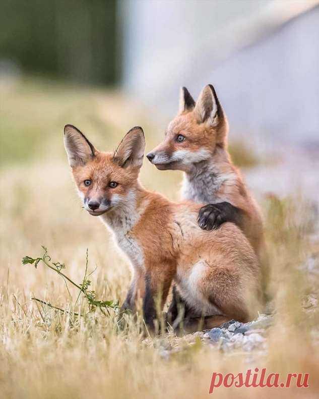 Милые детёныши животных на снимках Осси Сааринен . Тут забавно !!!