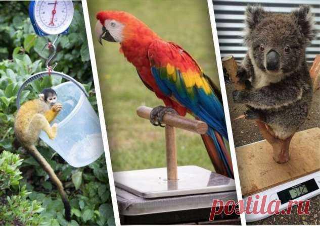 Как взвесить коалу или слоненка: ветеринары делятся секретами . Тут забавно !!!