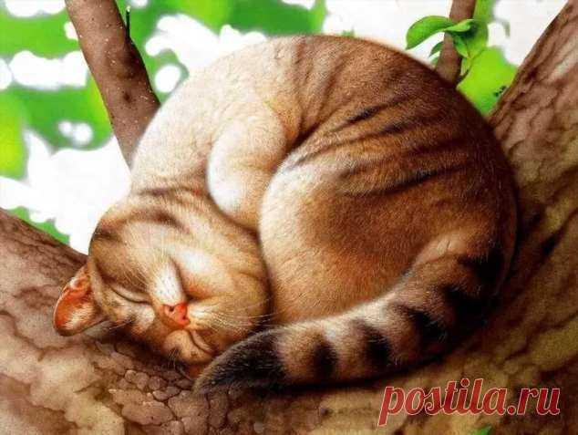 Забавные картинки с животными. Подборка №zabavatut-ani-20320120062020 . Тут забавно !!!