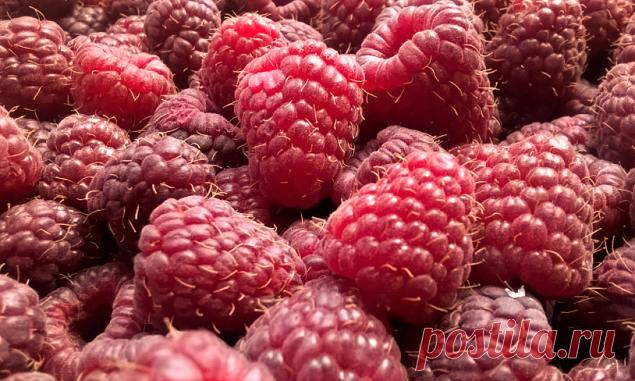 В Израиле запретили малину: раскрываем причину «нелюбви» к этой вкусной и полезной ягоде Мы себе даже и представить не можем лето без свежей малины, а зиму без самого любимого на свете варенья из целебных ароматных ягод! Малина — это вкус детства, лета, счастья. Но вот в Израиле на этот счёт, видимо, другое мнение. С апреля 2021 года малину там не купить ни в свежем, ни в мороженом, ни […] Читай дальше на сайте. Жми подробнее ➡