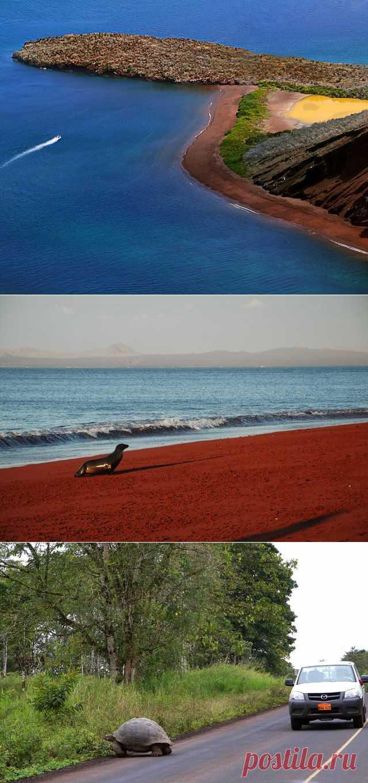 Красивые Галапагосские острова — Природа — Релакс!