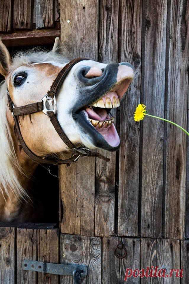Прикольные картинки с лошадью на тему работа