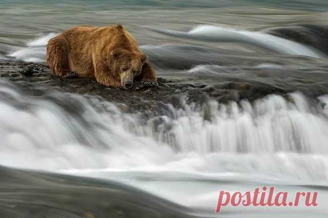 Медведь   рыбачит...