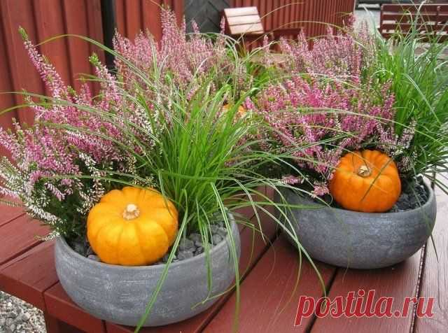 Heather in landscaping: landing, leaving, popular grades, ideas | Ideas of design (Огород.ru)