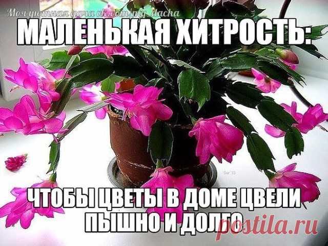 МАЛЕНЬКАЯ ХИТРОСТЬ: ЧТОБЫ ЦВЕТЫ В ДОМЕ ЦВЕЛИ ПЫШНО И ДОЛГО! Давно ли Ваш любимый цветок цвел, как в магазине цветов, не помните? Вот и я уже почти позабыла. Вроде и подкармливаю его, а он все не радует пышным