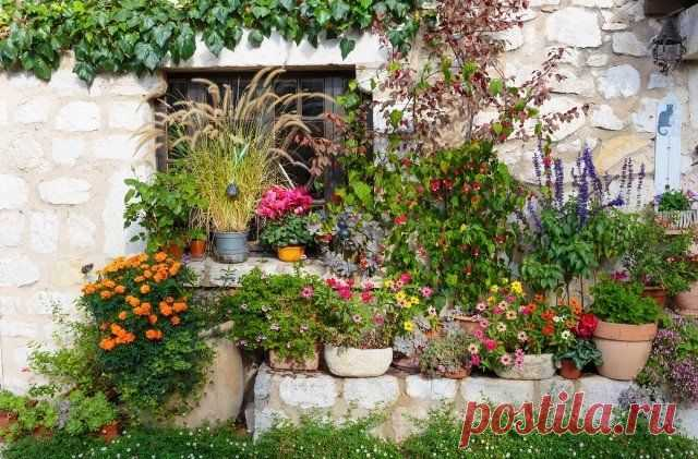 11 councils for arrangement of a garden in style Provence (photo) | Ideas of design (Огород.ru)