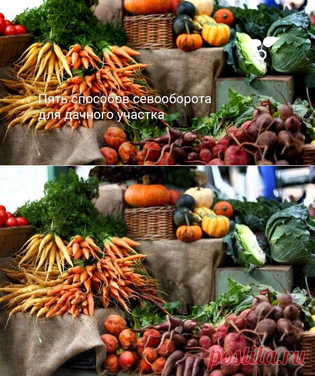 Пять способов севооборота для дачного участка. Таблицы севооборота овощных культур