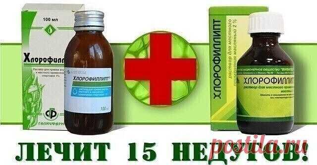 «Хлорофиллипт»: копеечное средство, которое лечит 15 болезней🌿🌿 | OK.RU