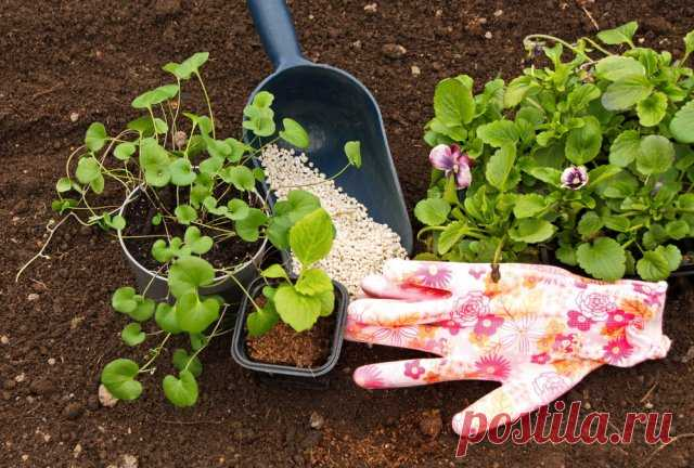 Que abonos aportar en primavera: que sobrealimentar el jardín, la huerta, el césped y el macizo de flores | los Abonos y los estimuladores (Огород.ru)