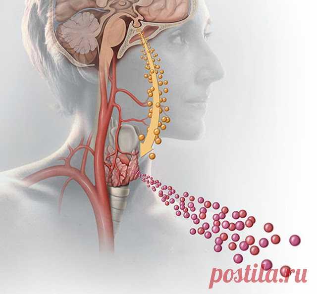 ТОП-13 продуктов, которых жаждет ваша щитовидка - Жизнь планеты