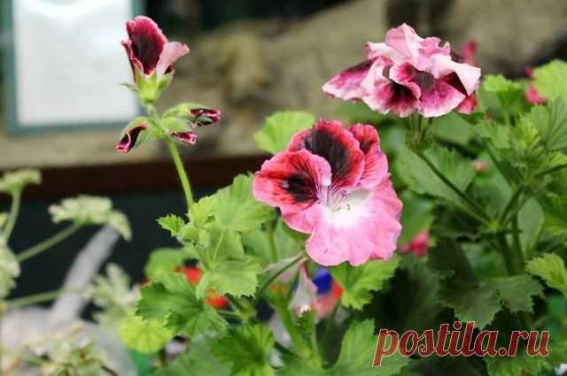 Действительно ли цветы очищают воздух в квартире? В процессе фотосинтеза растения вырабатывают кислород и поглощают углекислый газ.