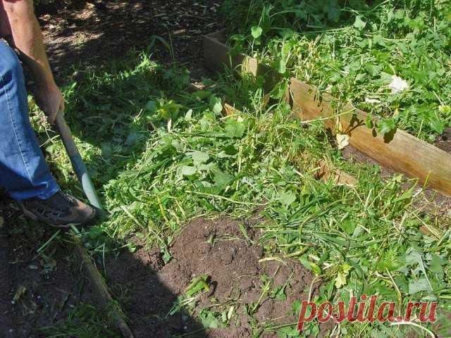 Как и когда правильно заделывать сидераты | Почва и плодородие (Огород.ru)