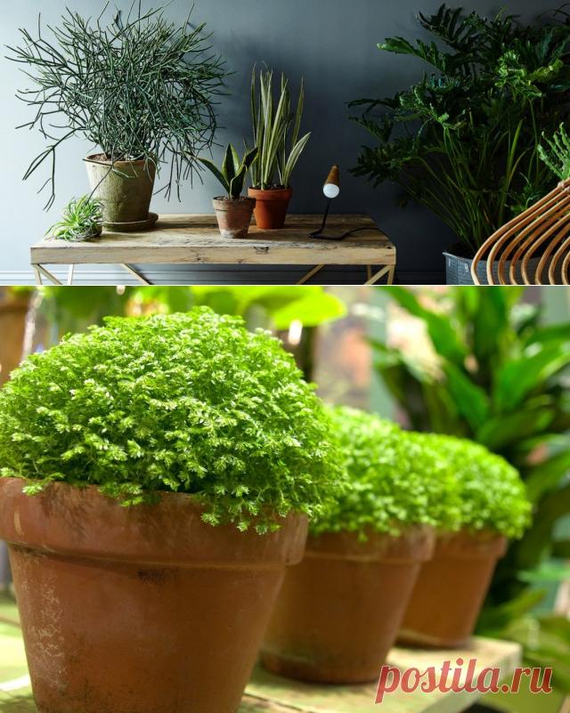 Неприхотливые комнатные растения с картинками