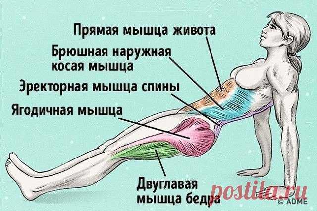 Упражнение, которое поможет сжечь жир и исправить осанку