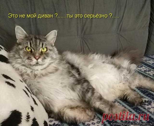 Свежая котоматрица для отличного настроения Как всегда предлагаем вашему вниманию коллекцию самых лучших котоматриц недели от популярного сайта!