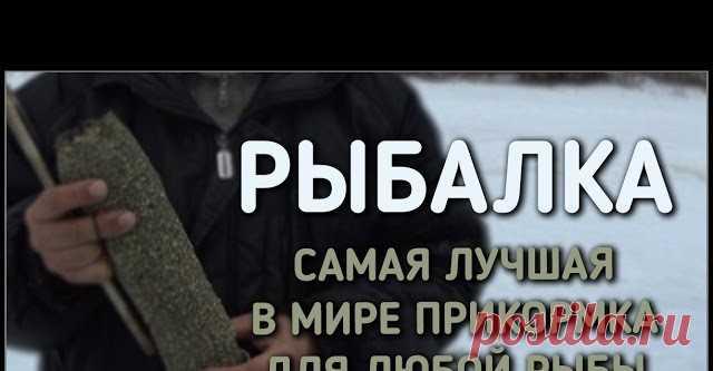 рыбалка / самая лучшая в мире прикормка для любой рыбы - видео онлайн. Сайт Новосибирских рыбаков Видео: рыбалка / самая лучшая в мире прикормка для любой рыбы - смотреть онлайн бесплатно. Рубрика: Обзоры снастей. Добавлено пользователем БратьяПриходько в 2018 году. В этом выпуске мы, наконец-то, расскажем какой прикормкой для рыбы пользуемся и как её делаем, а так же покажем как она работает