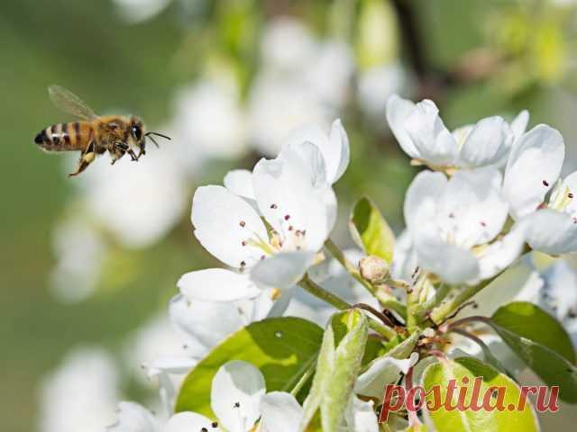 Маленькие труженики большого урожая — о роли опылителей в жизни растений. Фото — Ботаничка.ru