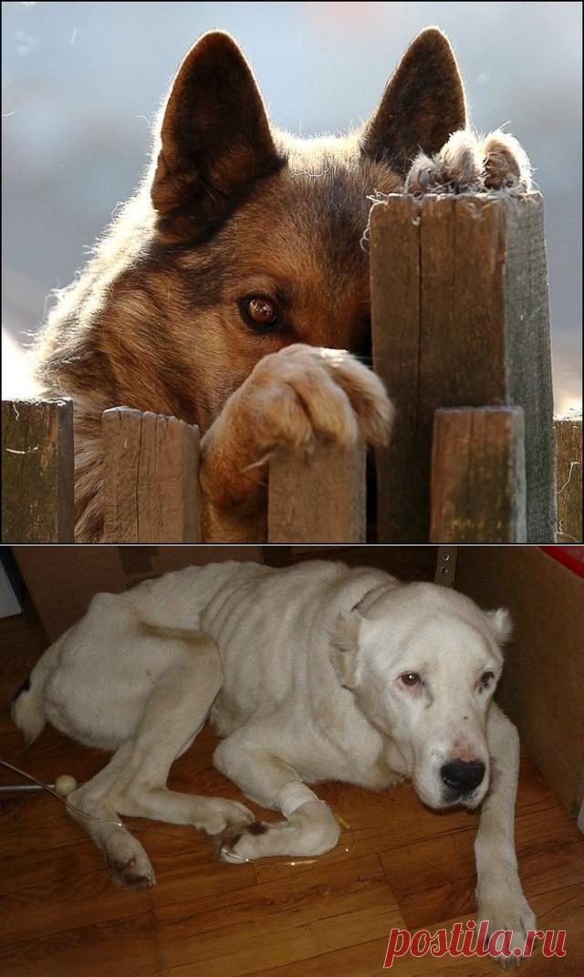 Говорят, бог смотрит на людей глазами собак / Питомцы