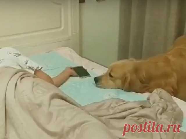 Видео дня: самый заботливый в мире пёс растрогал пользователей Сети В интернете «завирусилось» видео с очень внимательным лабрадором.