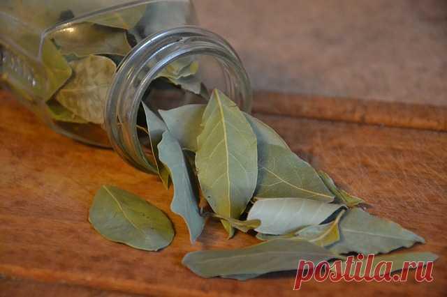 Магические свойства лаврового листа