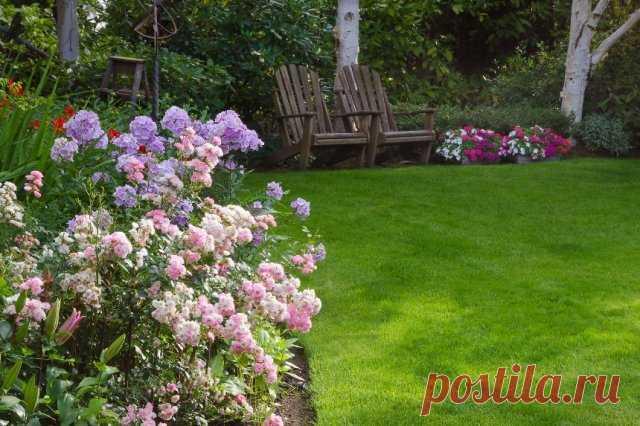 Как сделать стильный цветник из роз – подбор сортов, правила ухода - Садоводка