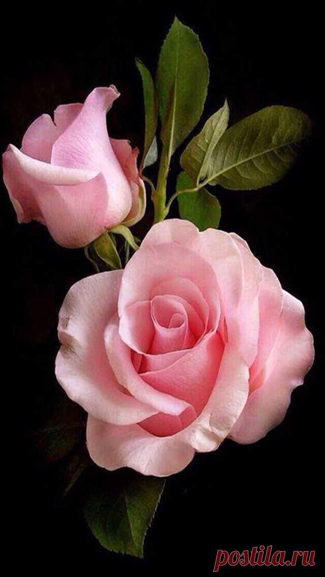 Поздравлением месяц, роза картинки блестяшки и анимашки