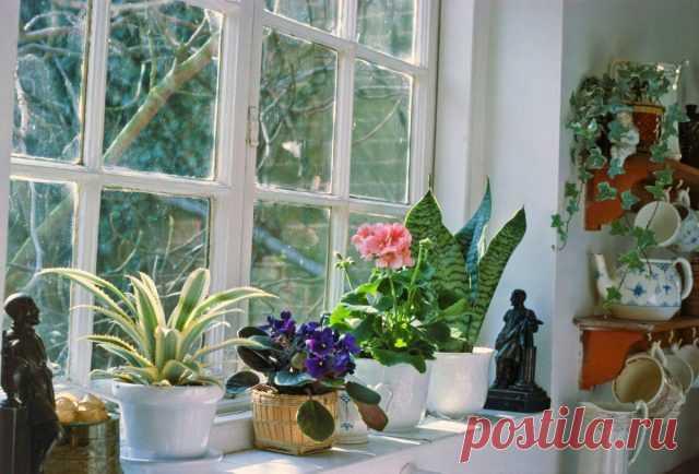 Важные особенности осеннего ухода за комнатными растениями. Коррекция полива, подкормок, влажности. Фото — Ботаничка.ru