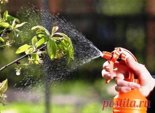 Как можно использовать ботву томатов с пользой для сада и огорода | Удобрения и стимуляторы (Огород.ru)