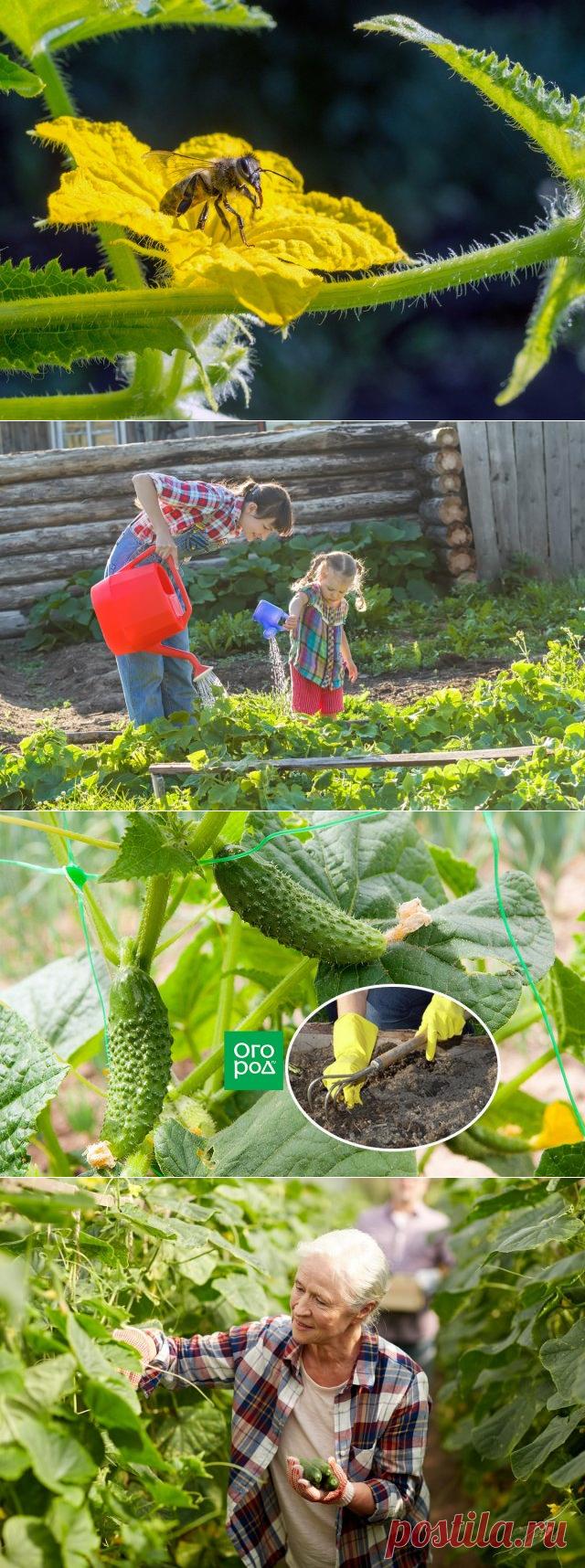 Технологии открытка, смешные картинки про урожай огурцов