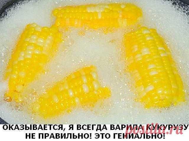 Оказывается, я всегда варила кукурузу не правильно! Это гениально!  Початки, обязательно, разламываем пополам.Бросаем половинки початков в кастрюлю и заливаем водой.Как только вода закипит, добавьте в кастрюлю 1 чашку молока и 1 приличный кусочек масла.Кукуруза должна покипеть еще 8 минут. И все готово!Готовые початки посыпьте солью.Кукуруза получается маслянистого вкуса и очень вкусной.