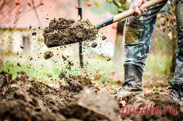 Подкормить и перекопать. Что делать с грядками, с которых убрали урожай? Наступили последние дни лета — период уборки овощей. Некоторые культуры огородники уже собрали, и у них возник вопрос, что же делать с опустевшими грядками.