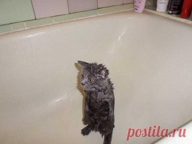 Чистый четверг картинки с юмором, кошками клеточкам