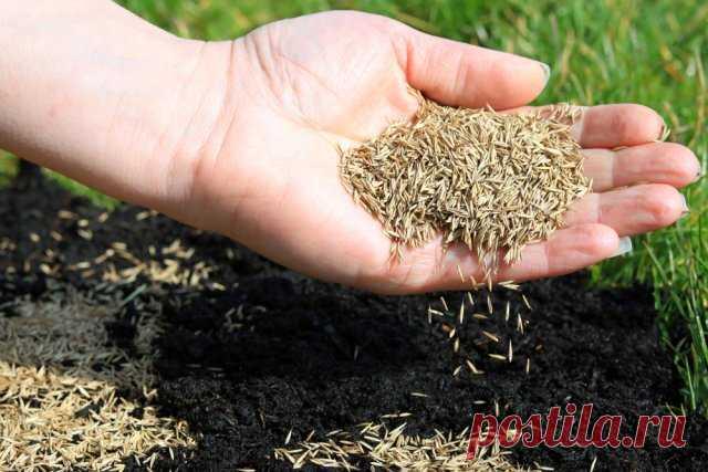 Роскошный газон для лентяев, возможно ли? Важные правила для красивого и беспроблемного газона   Газон (Огород.ru)