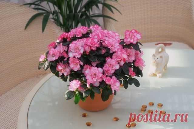 Какие комнатные цветы лучше выращивать зимой? АиФ.ru отвечает на популярные вопросы читателей.