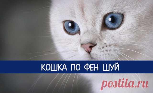 Кошка по Фен шуй - Эзотерика и самопознание