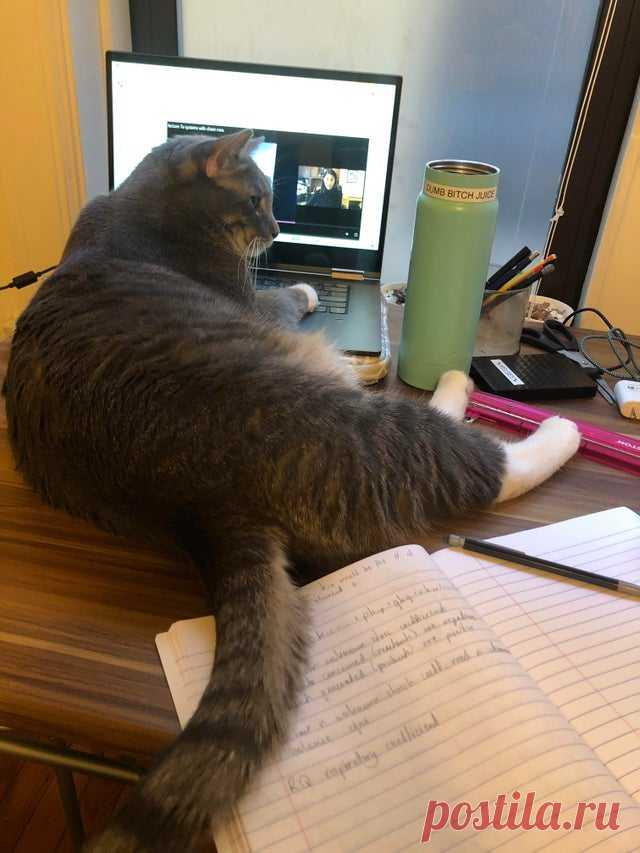 """18 котиков, которые делают весомую заявку на победу в номинации """"Самая наглая морда"""""""