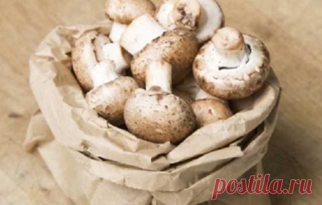 How to store mushrooms? — Useful tips
