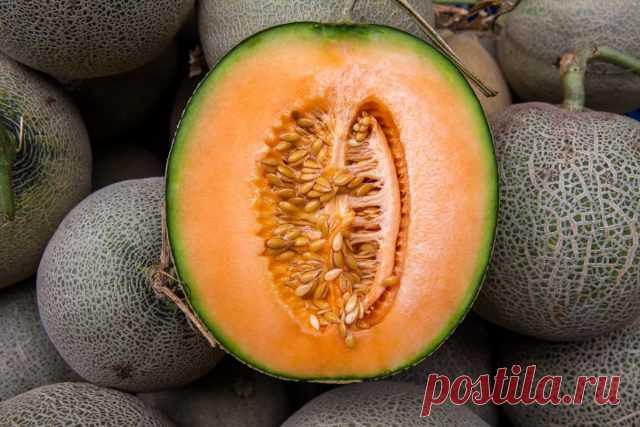 Мускусная дыня, или Канталупа — удивительные сорта с оранжевой мякотью