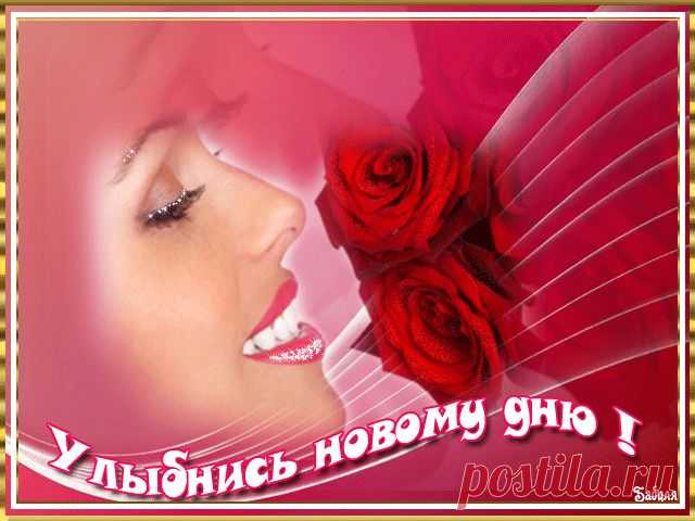 http://mir-animashki.com