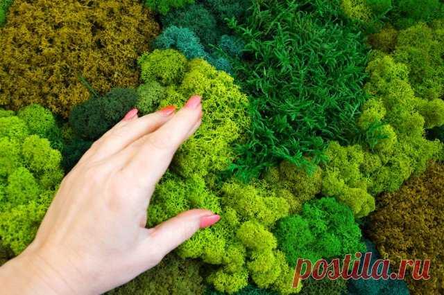 Садик мхов – как создать на участке и правильно ухаживать | Цветники и клумбы (Огород.ru)