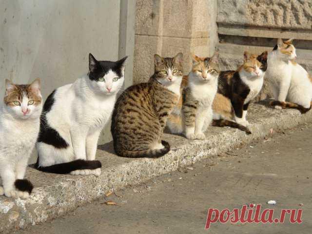 Реальная история: город, который спасли кошки  Кошки играют в жизни человека немалую роль. Они дарят свою любовь, успокаивают мурлыканием, лечат теплом. Но не только владелец животного ощущает его значимость. Судьба целых городов иногда оказывает…