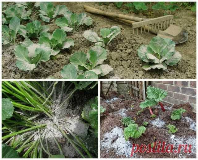 4 беспроигрышных способа применения древесной золы на даче   Почва и плодородие (Огород.ru)