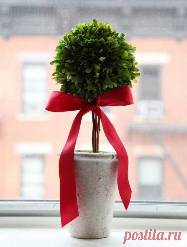 Комнатный цветок, украшенный бантиком