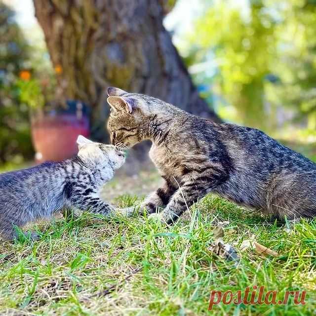 Если ты еще совсем малыш, тебя умоет мама. 😸💓 •° 🐾✨Хотите, чтобы ваша жизнь круто изменилась?✨ 🐾 ‼️Возьмите меня жить к себе (совершенно бесплатно) и вы никогда не пожалеете!‼️ Желающие пишите в личку или в комментарии!🐈🐈🐈  #котятабесплатноалматы #котятабесплатно #котятадаром #кошкиалматы #котятаалматы #купитькотенка #котятавдаралматы #котятавдобрыеруки #котятанапродажу